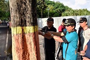 Aksi Bupati Lumajang saat mencabut paku di pohon
